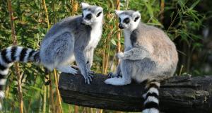 Cap au Sud de Madagascar à la découverte d'Androy