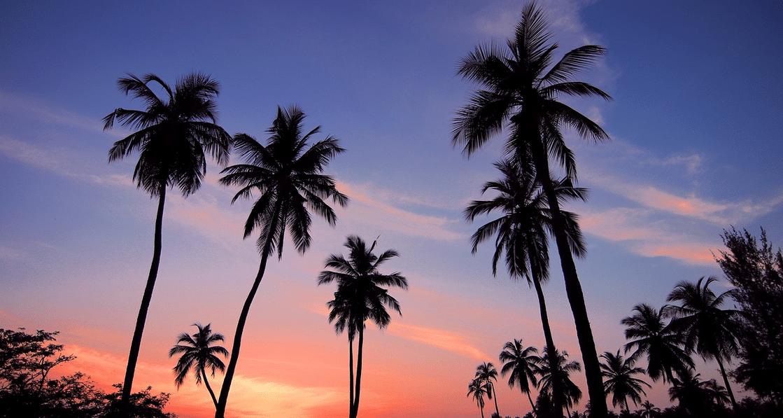 Pourquoi devriez-vous demander votre visa Sri Lanka